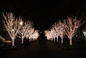 Trees Columbia University NY, 2014