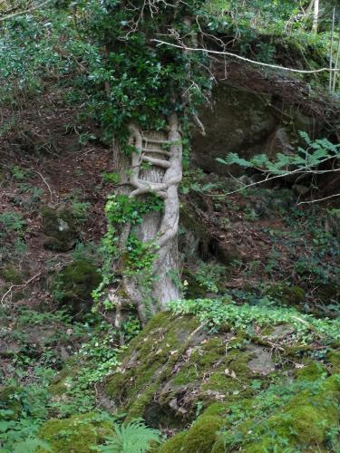 Feenleiter, Loch Aline