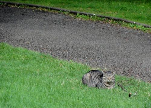 Katze, McCraig's Tower Oban