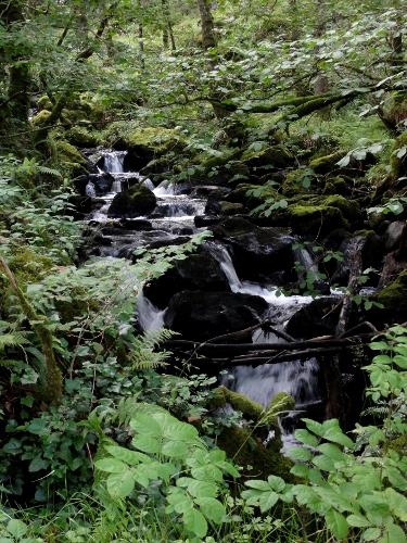 Wasserfall, Loch Aline