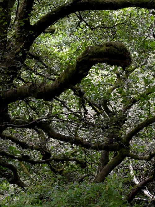 Wald auf Arran